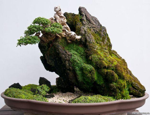 ky thuat tao cay bonsai om da don gian 4