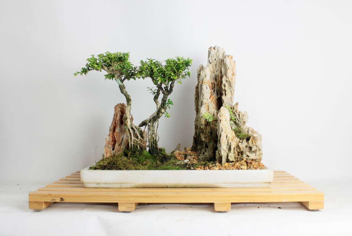 ky thuat tao cay bonsai om da don gian 11